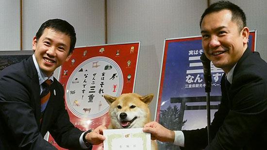 萌化人心的8岁日本小狗肩负推广三重县旅游大业的